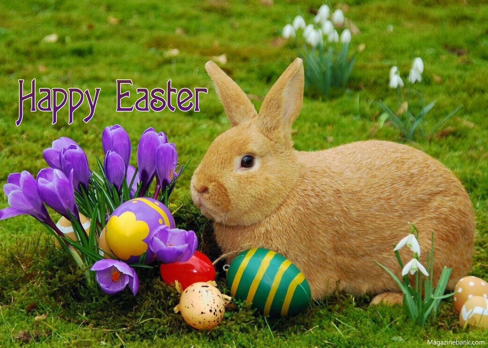 Pretty Happy Easter Pictures Photos and Images for Facebook 1600x1143