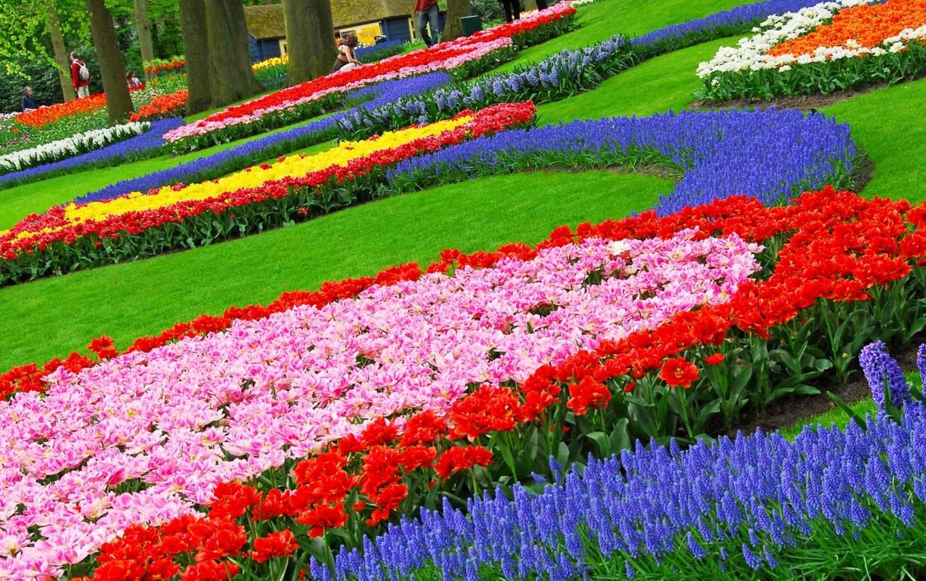 Beautiful Flower Garden Hd Wallpaper Flowers Healthy