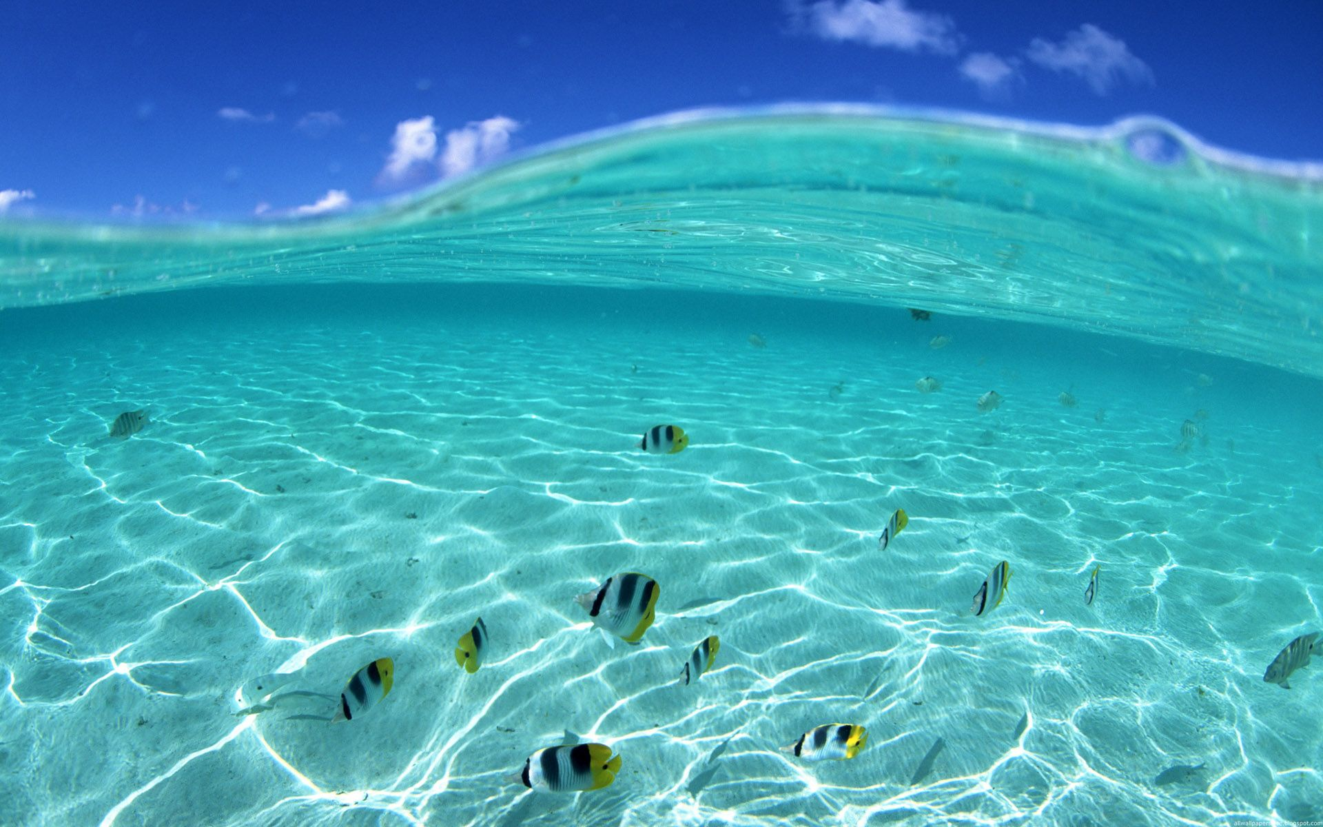 Wallpaper 1 of 1   Light Blue Beach Water Fish Swimming HD Wallpaper 1920x1200