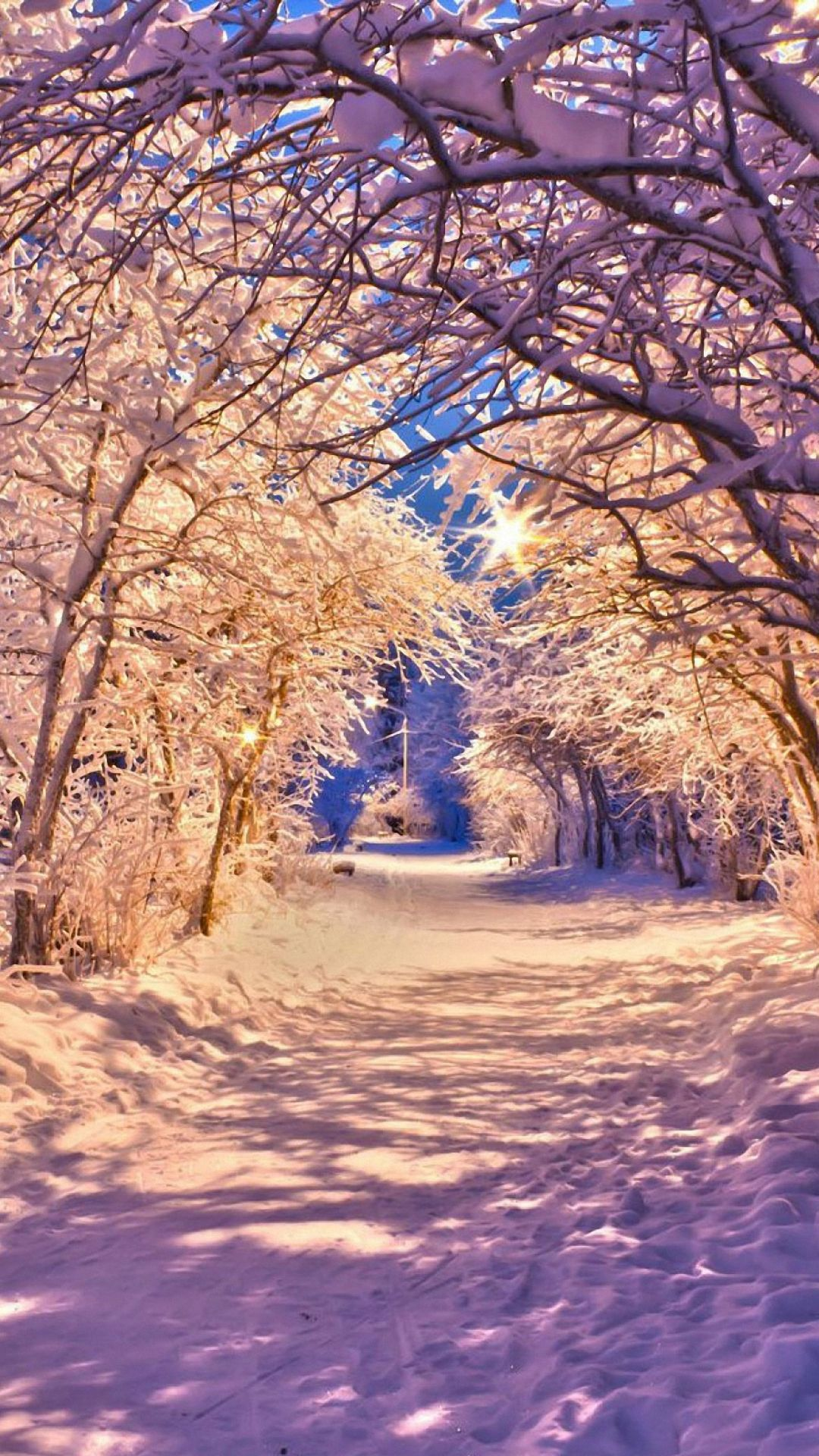 Winter trees dark night lights alone houses wallpaper in 2020 1080x1920