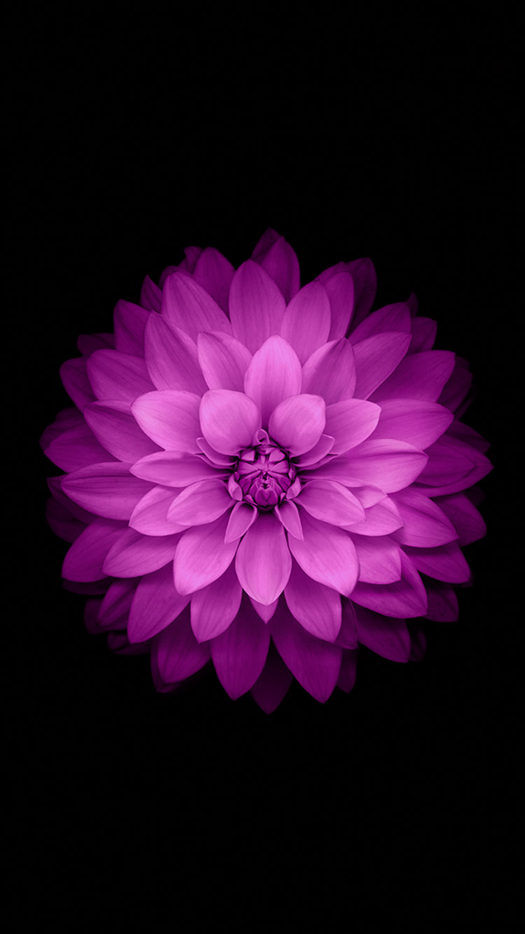 iPhone 6 Official Wallpapers purple flowers HD iPhone 6 Wallpaper 750x1334