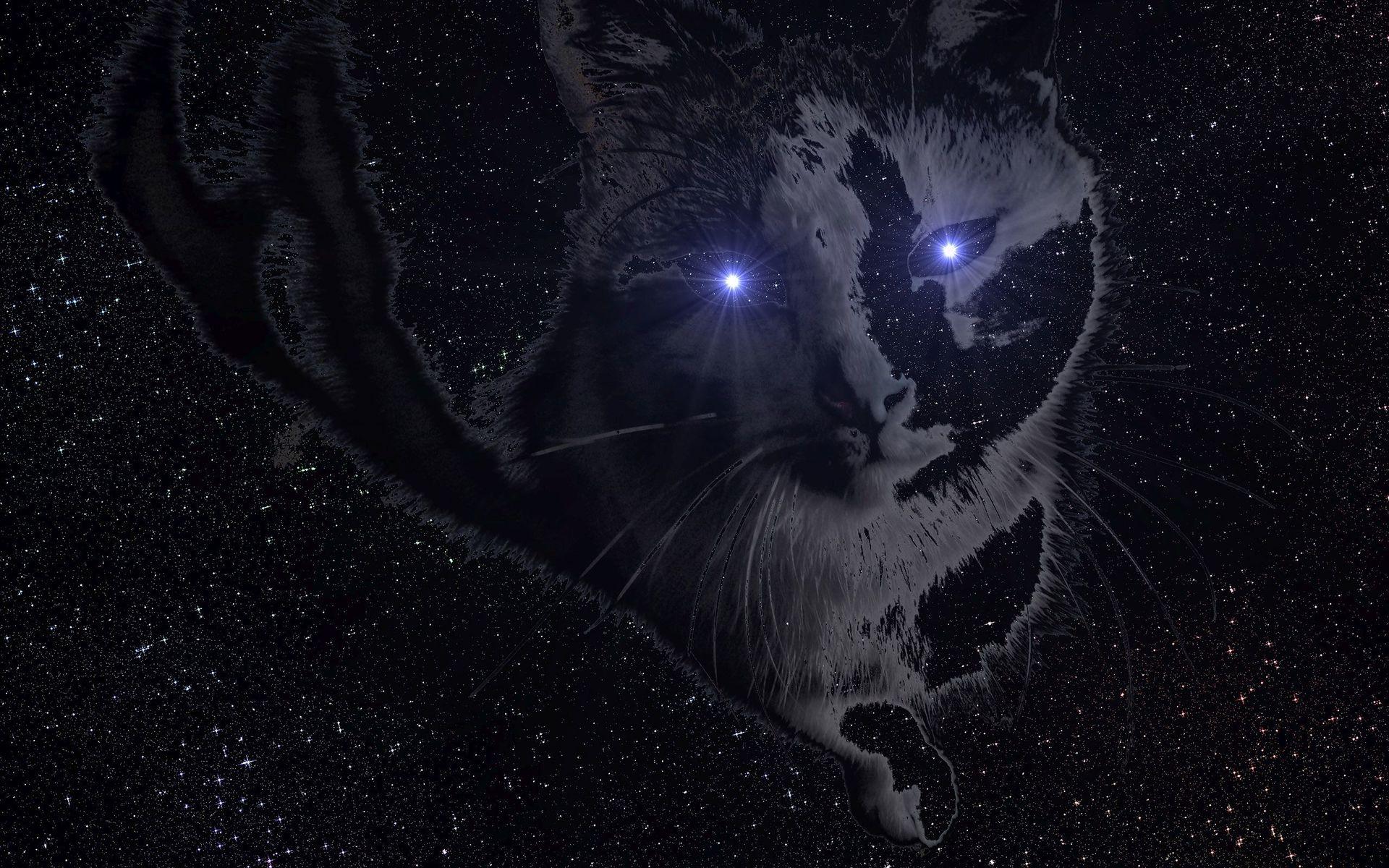 Space cat Wallpaper 39626 1920x1200