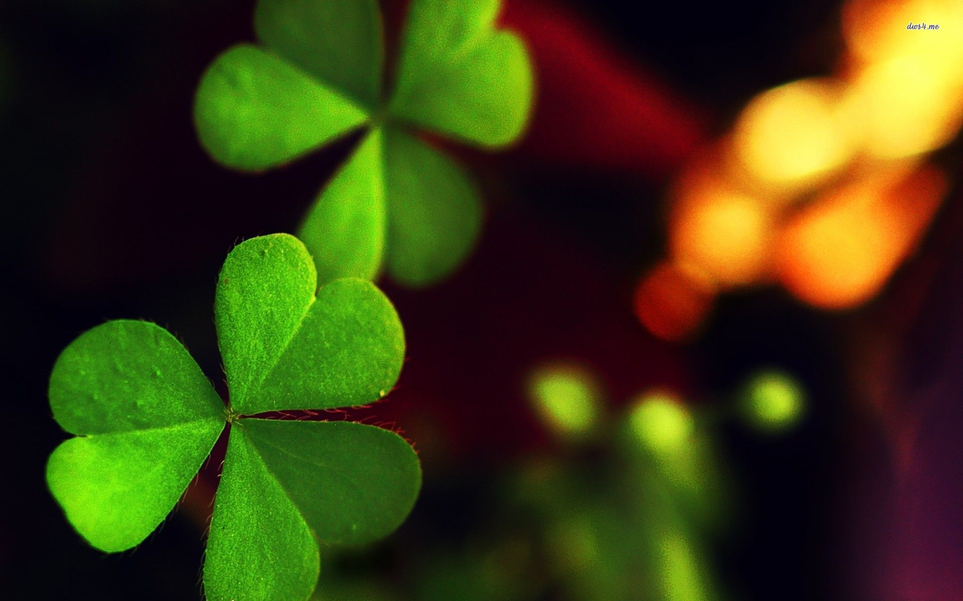 Clover wallpapers HD   429899 1920x1200