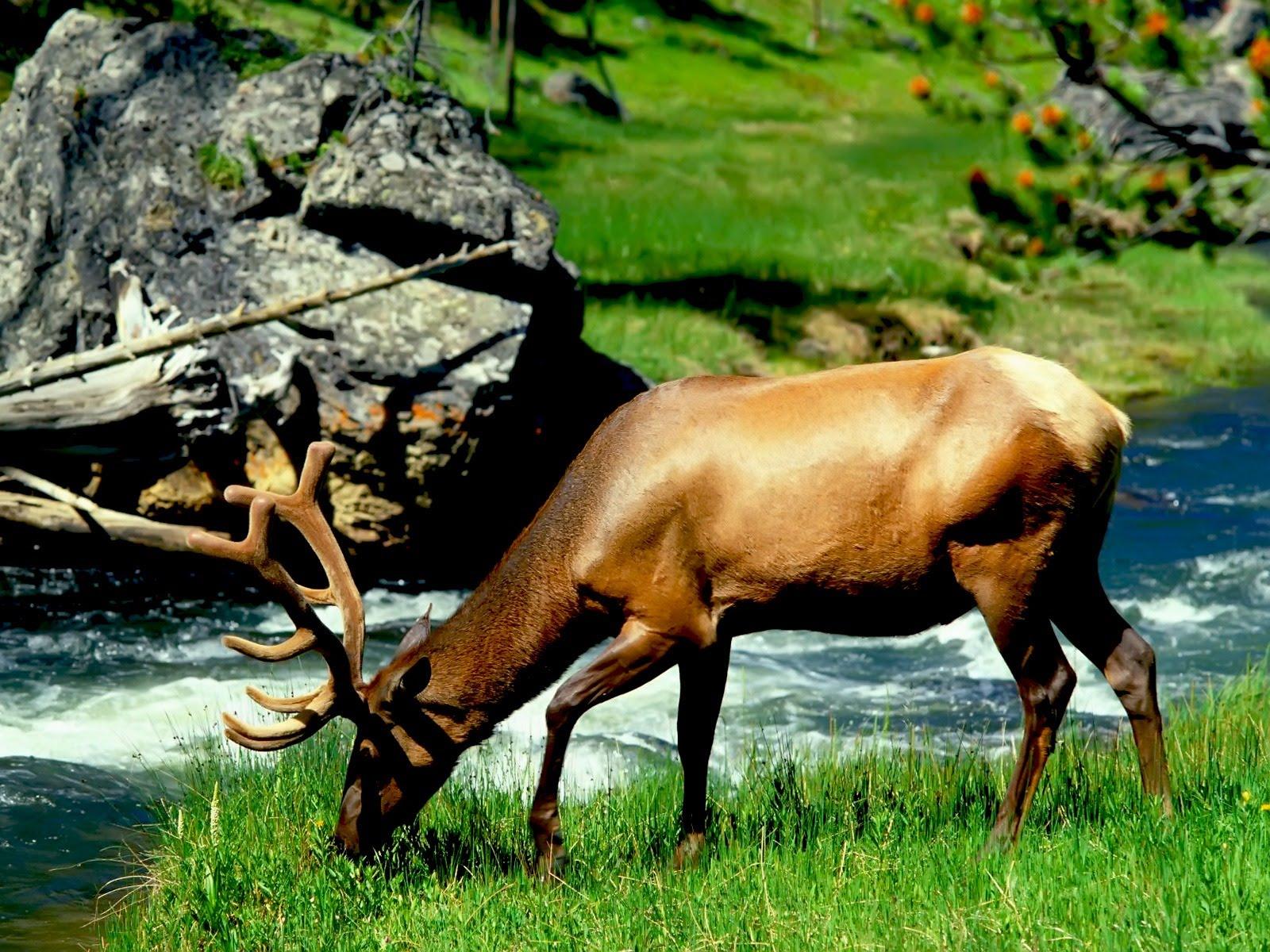 Animals Zoo Park Deer Photos   Deer Wallpapers For Desktop 1600x1200