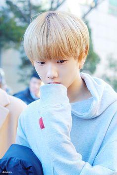 JiSung   NCT NCT DREAM NCT Pinterest Resor 236x354