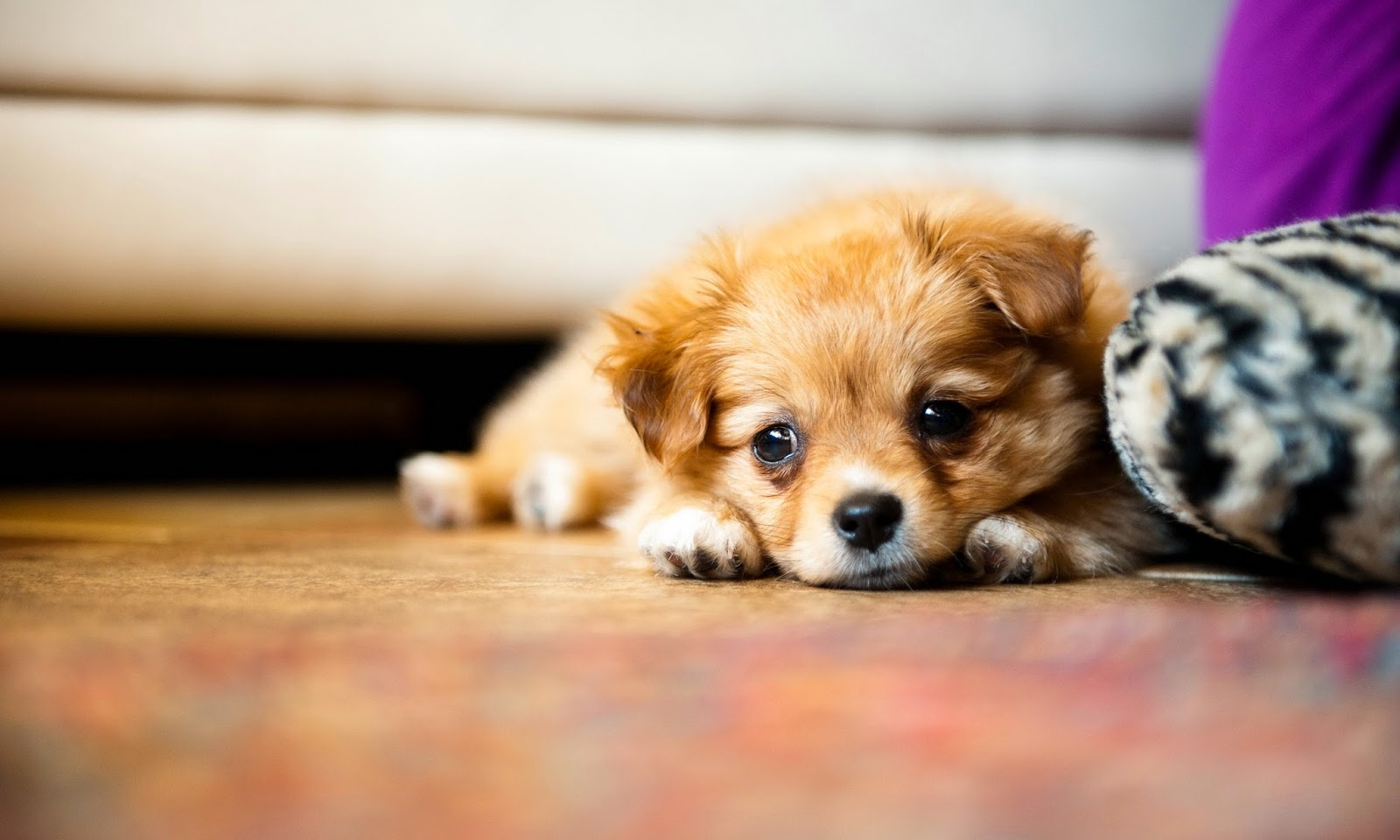 20+ Wallpaper Puppies Love Gif