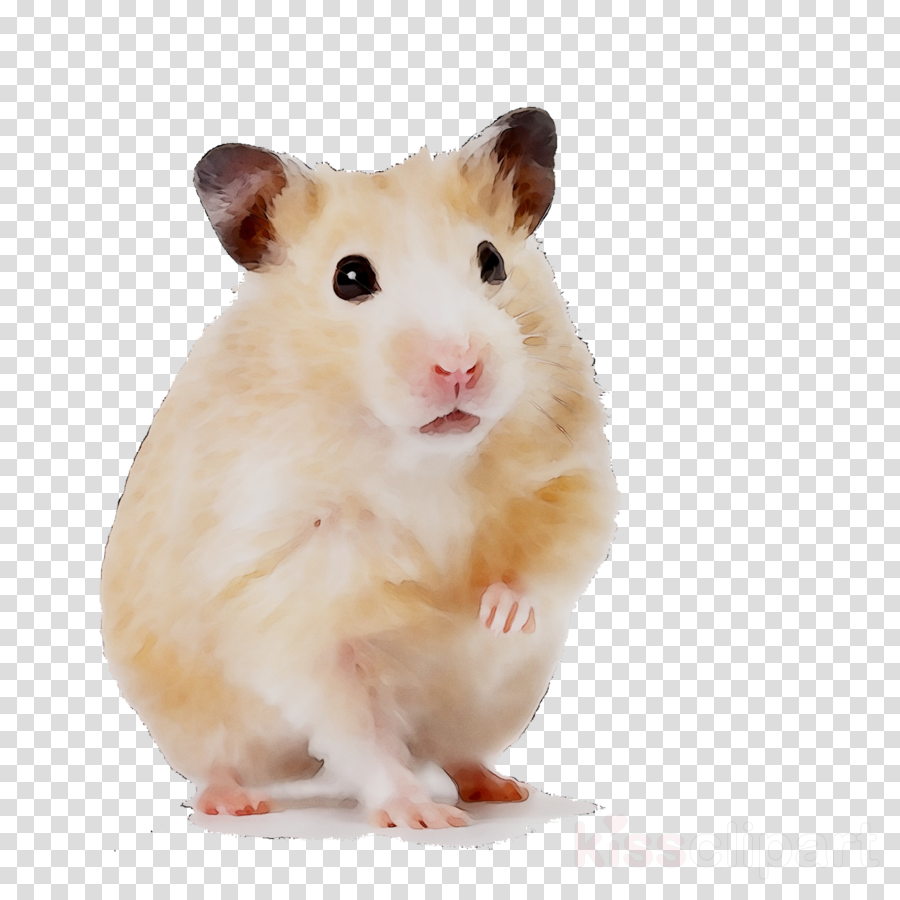Hamster Background clipart   Pet Dog White transparent clip art 900x900