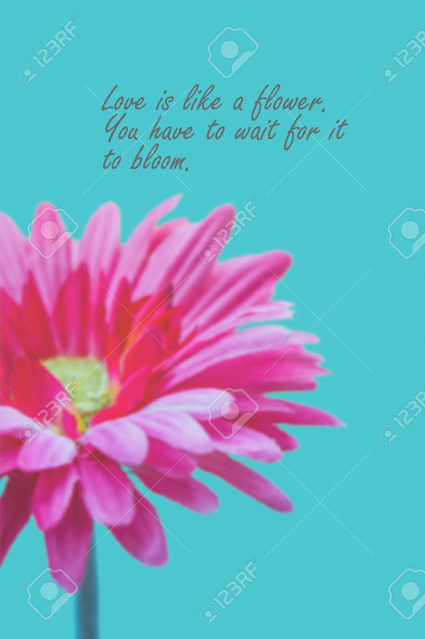 Love Quotes On Pink Gerbera Flower Background Stock Photo Picture 866x1300