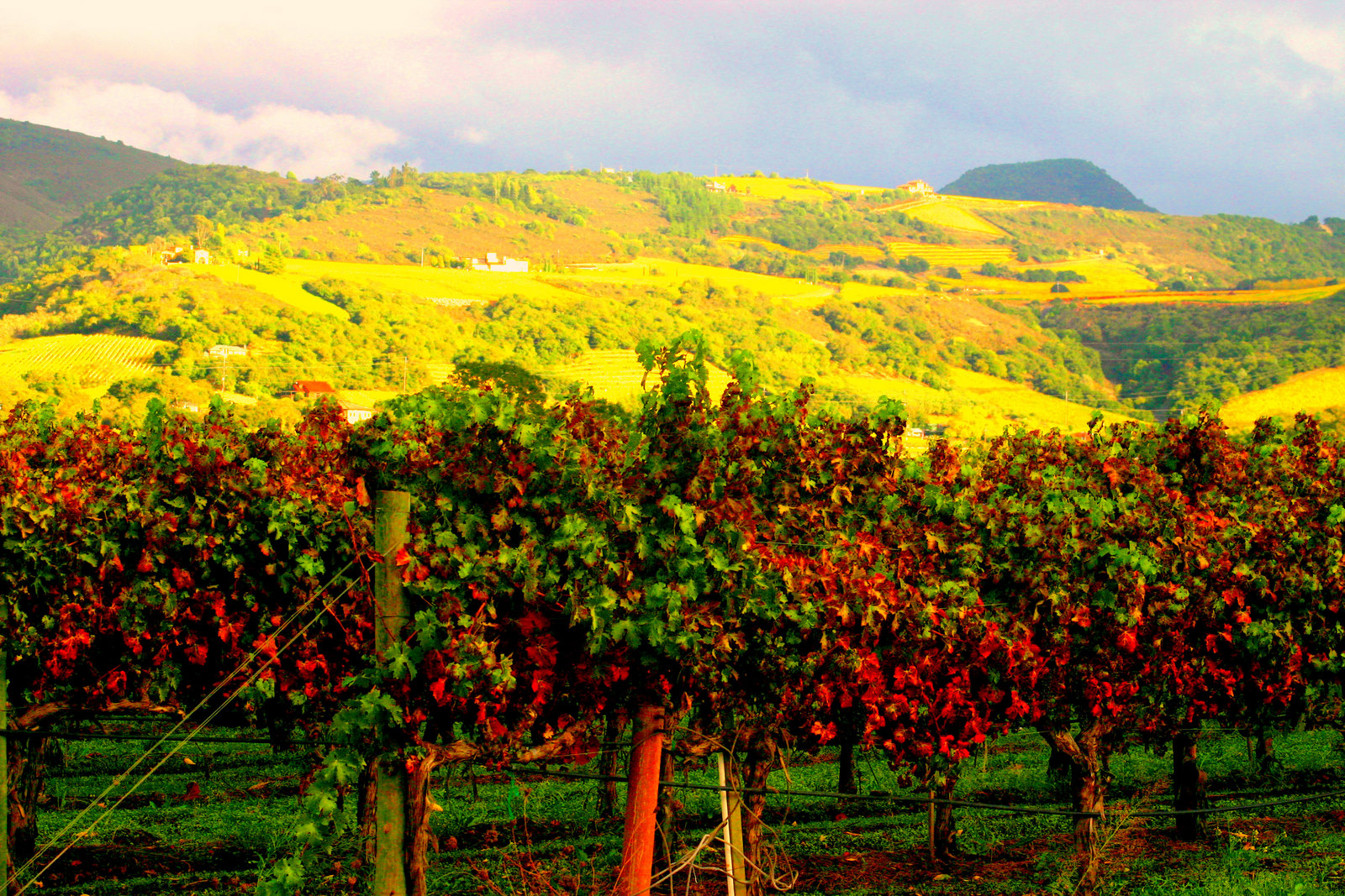 Best Vacations Ever Blog   Wine Tasting Tips for Napa Valley Newbie 1600x1067