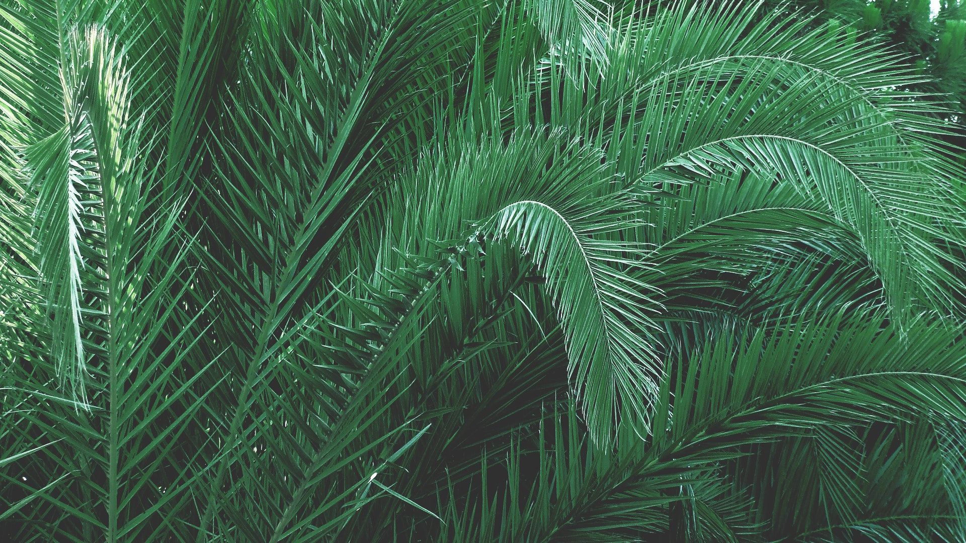 Plants Aesthetic PC Wallpapers   Top Plants Aesthetic PC 1920x1080