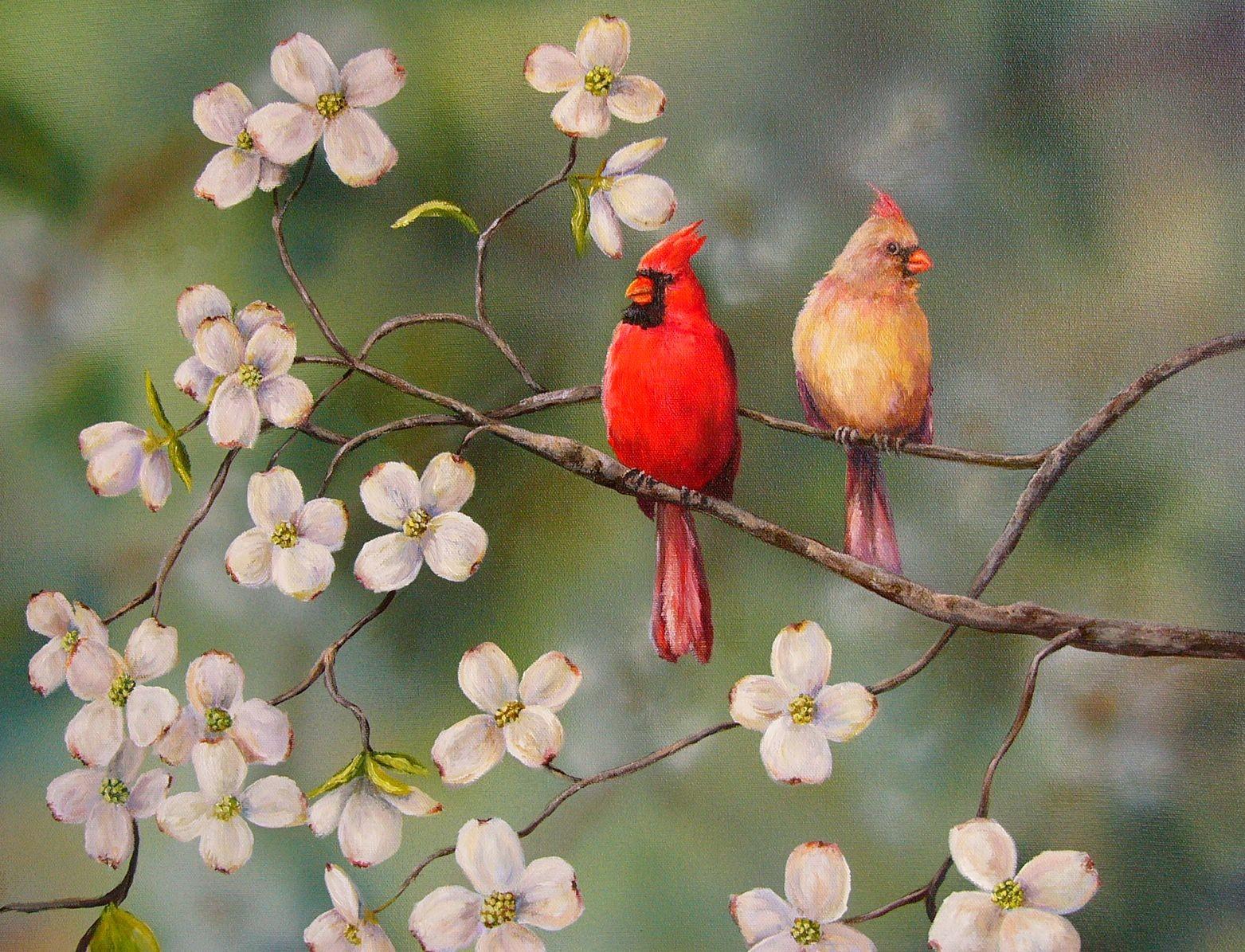 cardinalscardinal birdflying cardinalsweet cardinalsred cardinal 1563x1195