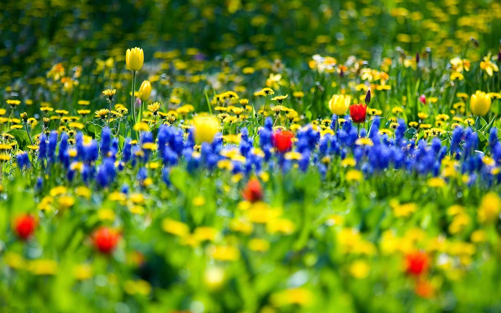 Spring Flowers New HD Wallpapers   Wallpapers 1600x1000