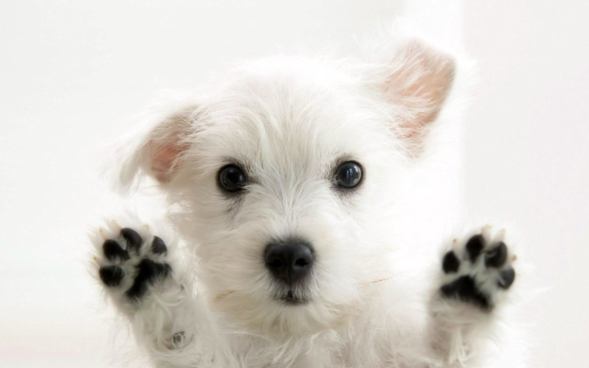 New Dogs Wallpapers Download High Quality HD Images 1920x1200