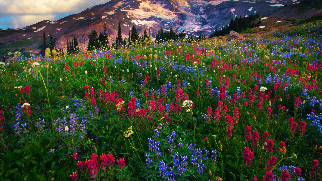 Mt Rainier Computer Wallpapers Desktop Backgrounds 1366x768 ID 1366x768