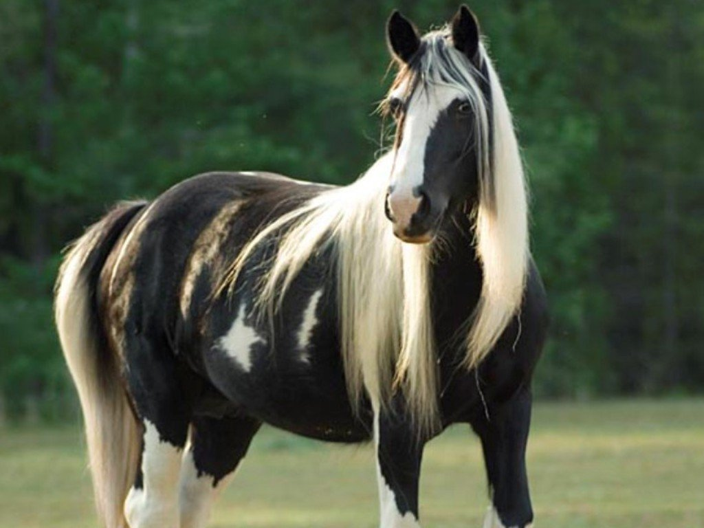 Black And White Horse Wallpaper Horse white black 1024x768