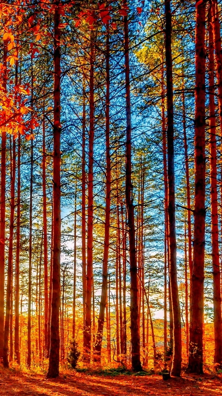 Autumn Forest Painting iPhone 6 Wallpaper iPhone 6 Wallpaper 750x1334