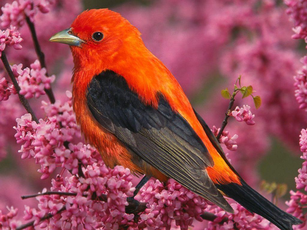 Colors images Colourful Tropical Bird wallpaper photos 17474497 1024x768