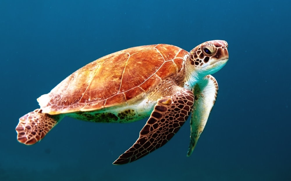 500 Turtle Pictures Download Images on Unsplash 1000x625