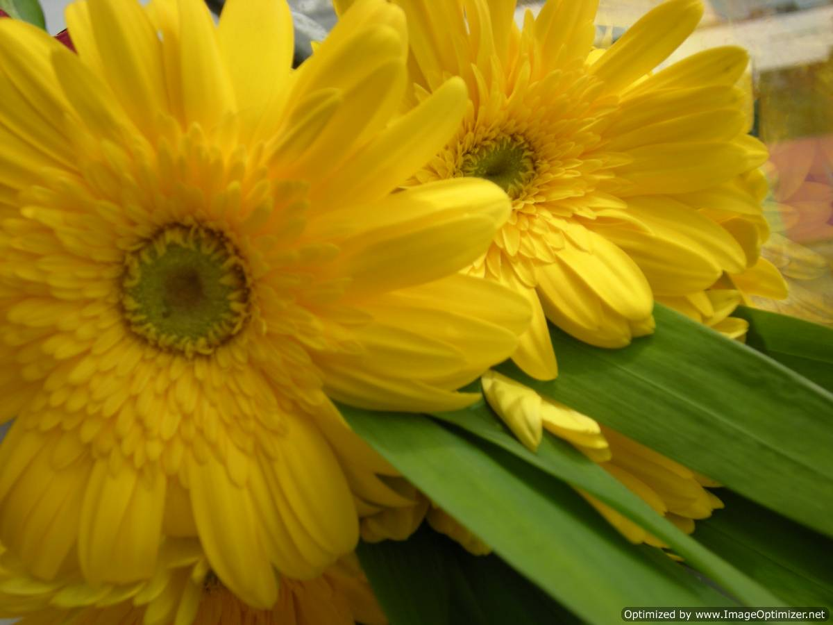 Beautiful Wallpapers gerbera and daisy flower wallpaper 1200x900