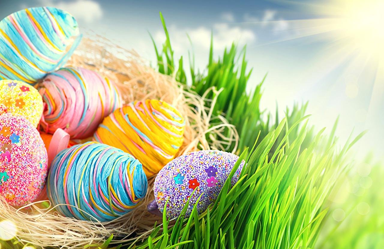 Fotos Ostern Ei Gras Feiertage 1280x831