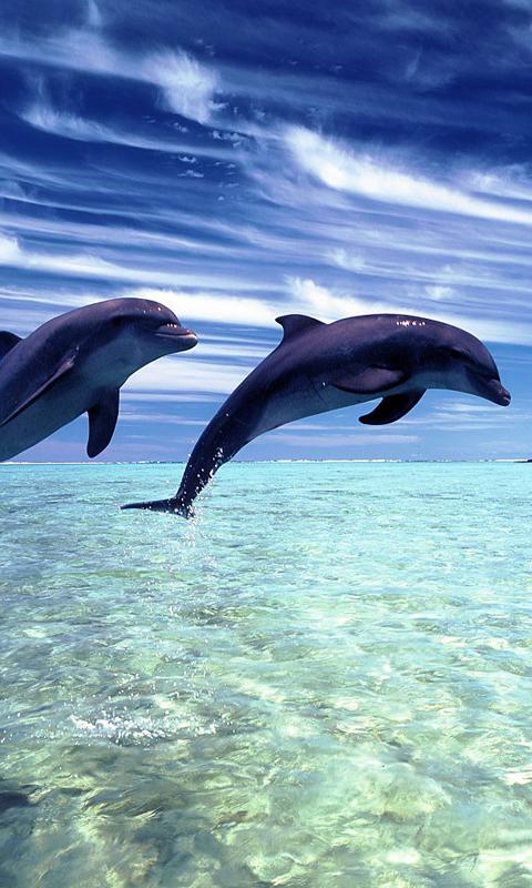 Dolphin Beach 480x800
