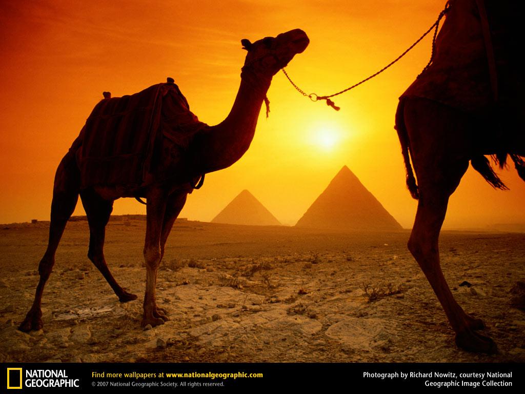 Camels and Pyramids Wallpaper   Egypt Wallpaper 773002 1024x768