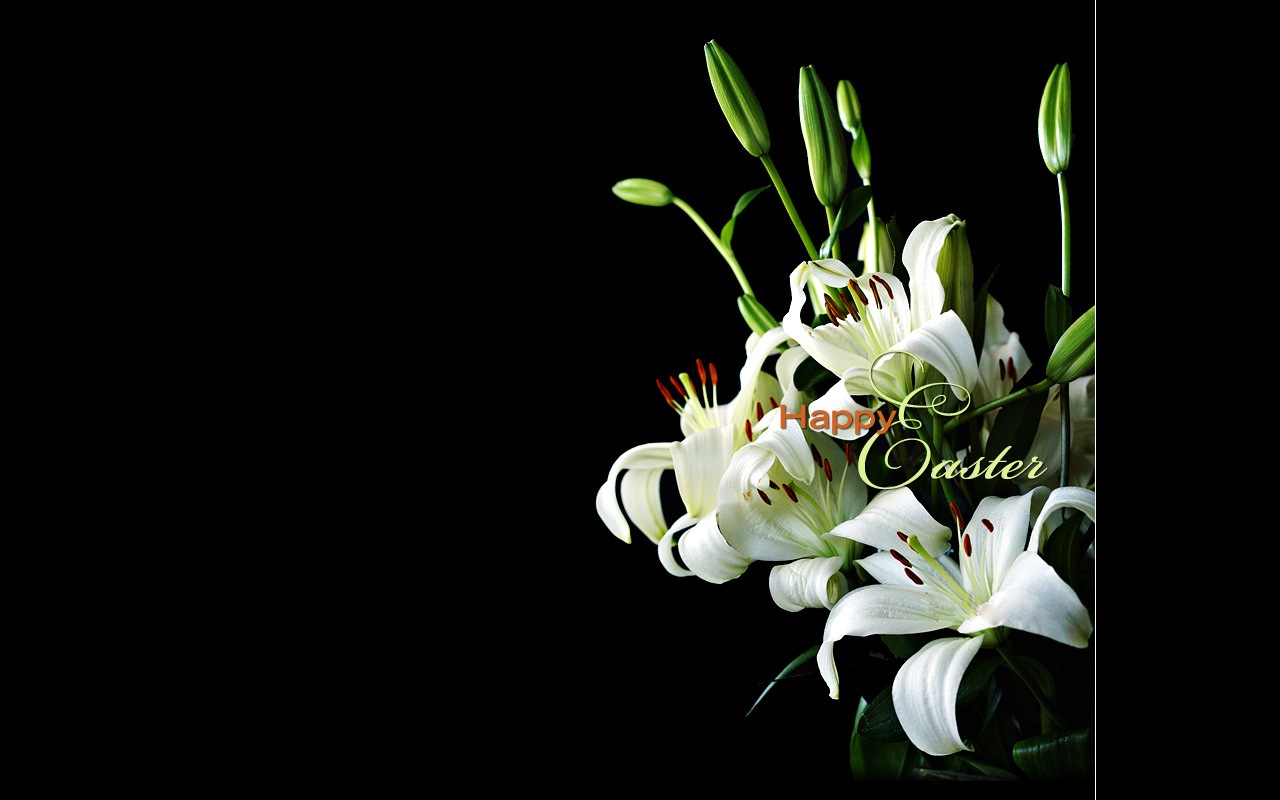 Holiday Wallpapers Easter Lily Wallpapers 1280x800