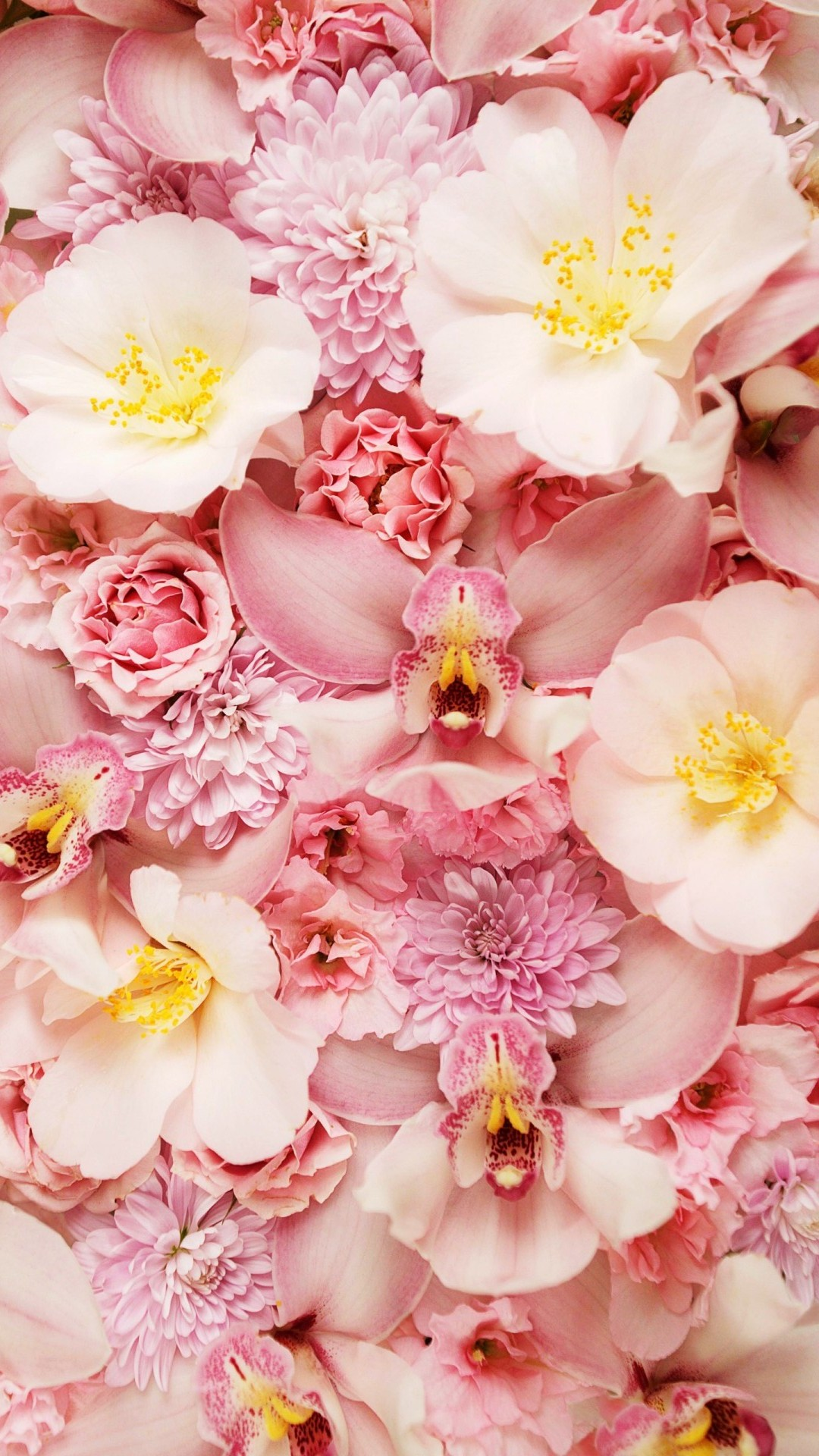 Pink Flower Phone Backgrounds 2020 Cute Wallpapers 1080x1920