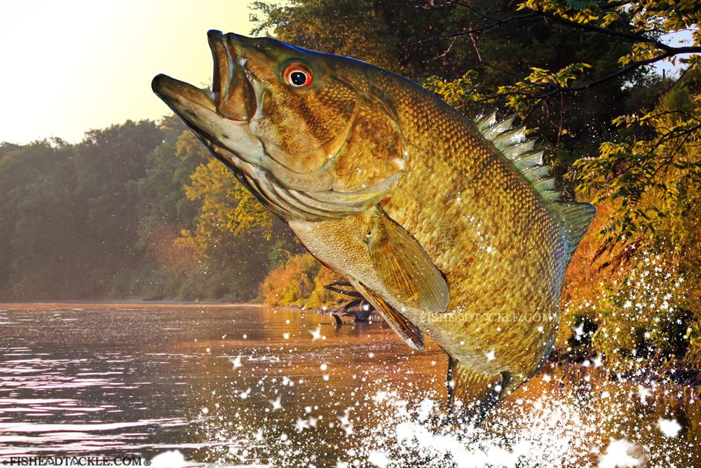 Smallmouth Bass Wallpaper Rock river smallmouth bass 1000x667