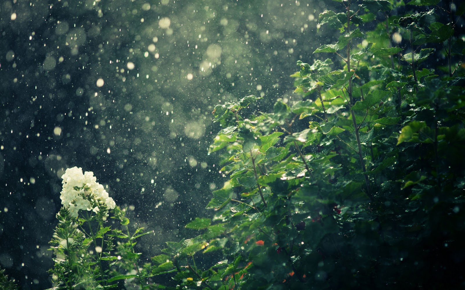 Rain Falling HD Wallpapers Pictures Images Backgrounds 1600x1000