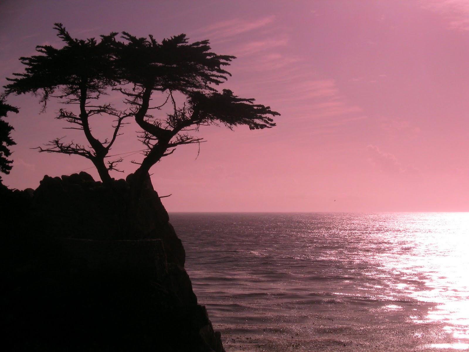 California Beach Sunset Cyprus Point Photo Wallpaper Beach Wallpaper 1600x1200