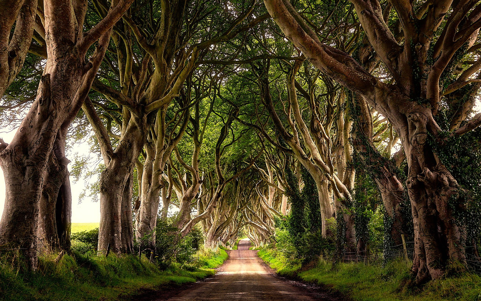 The Dark Hedges Northern Ireland Wallpaper desktop 1920x1200