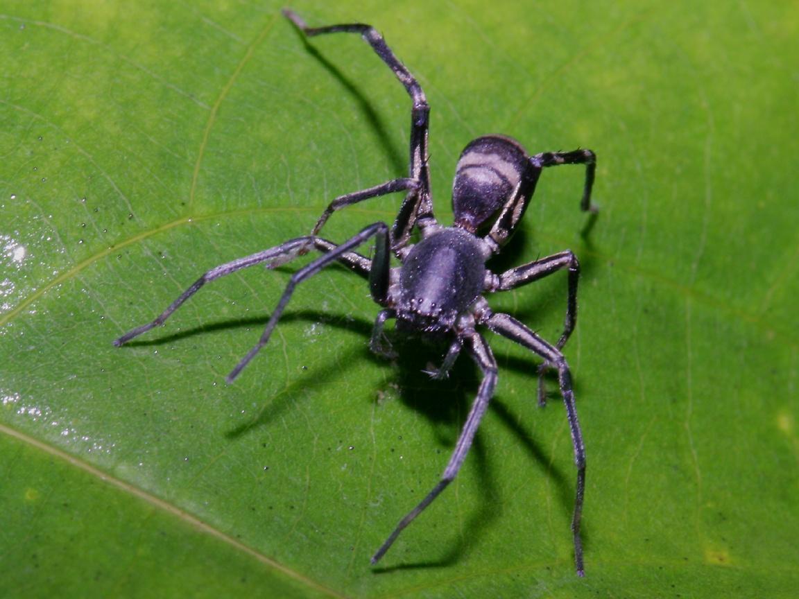 Unusual Spider Wallpaper 1152x864