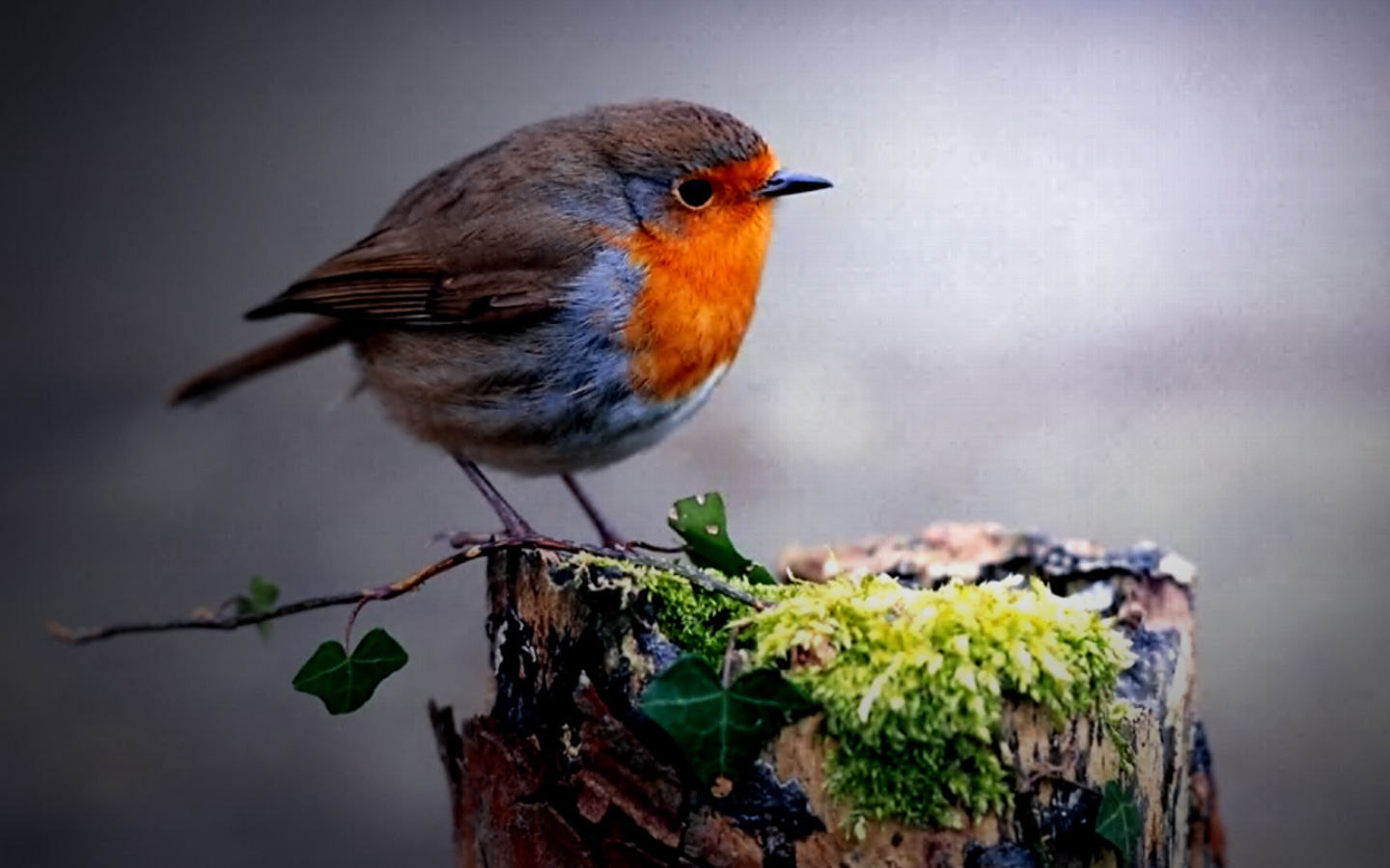 Cute Circle Bird Wallpaper Download Wallpaper WallpaperLepi 1440x900