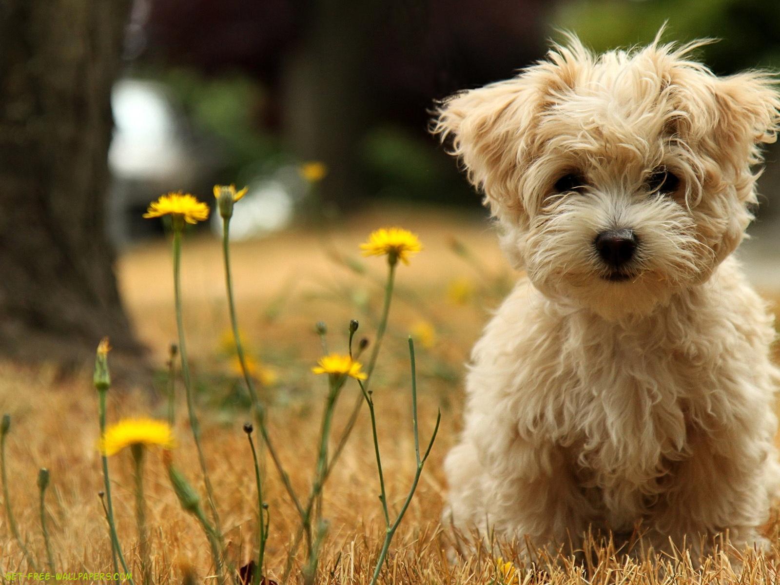 Download Puppy Wallpaper 1600x1200
