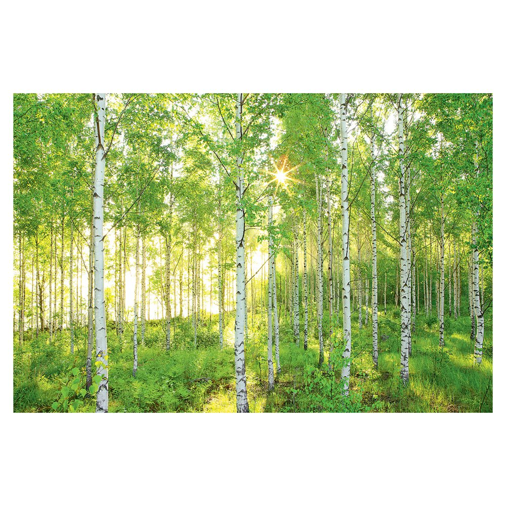Wallcoverings 8 519 Sunday Birch Forest Mural Lowes Canada 1000x1000