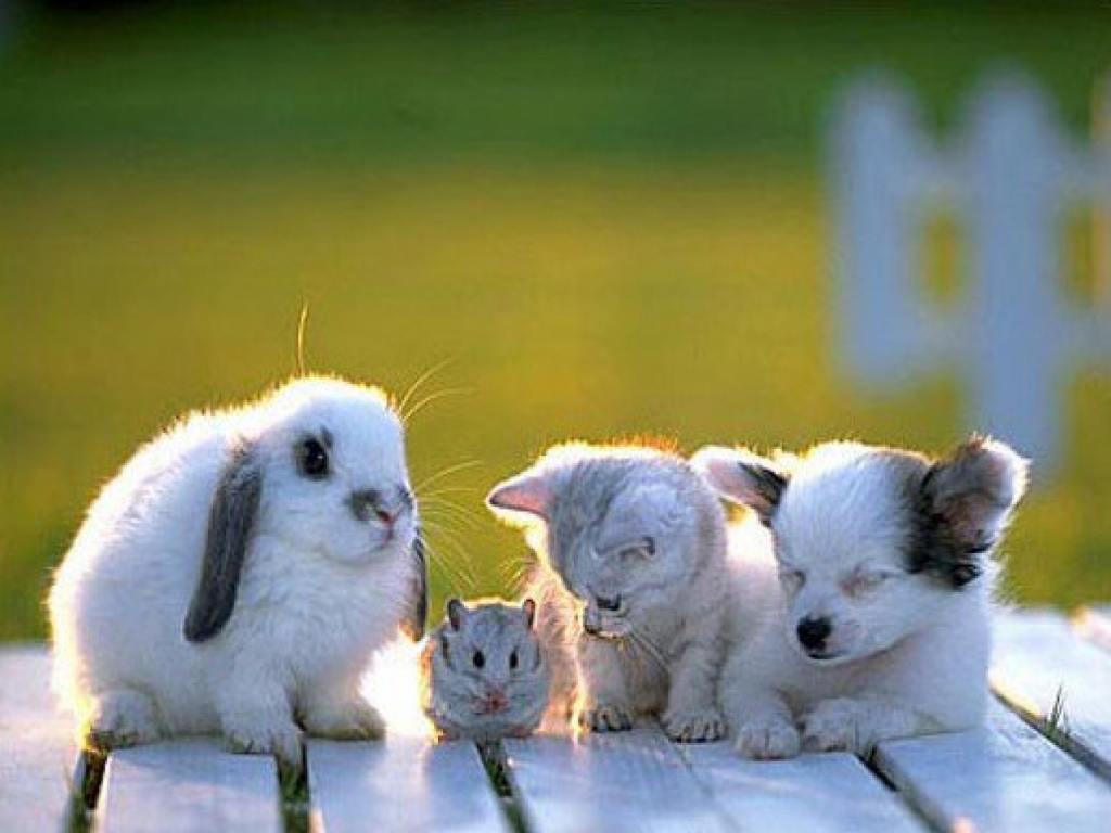 Baby Animal wallpaper 1024x768 3609 1024x768