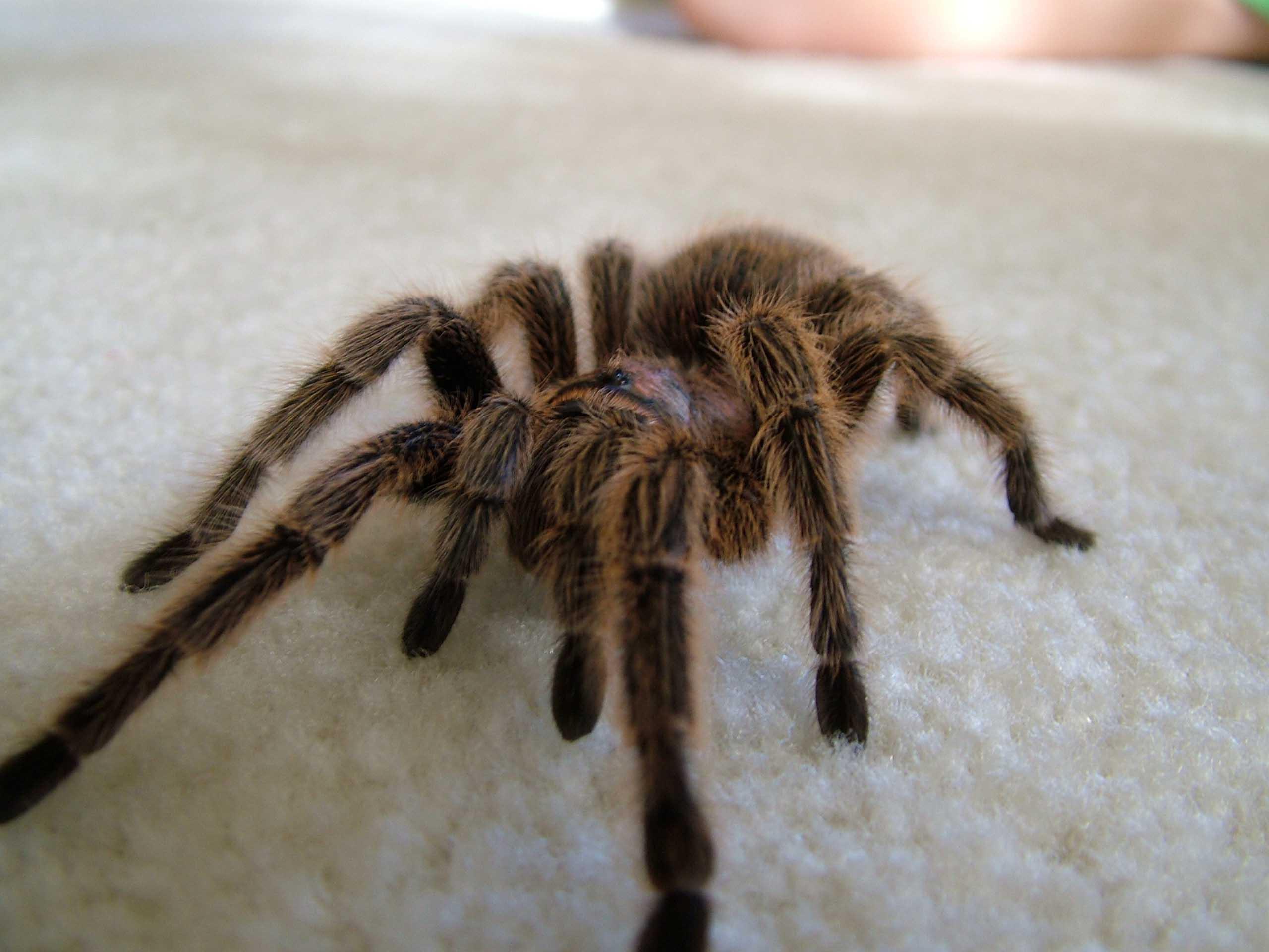 Moving Spider Wallpaper - WallpaperSafari