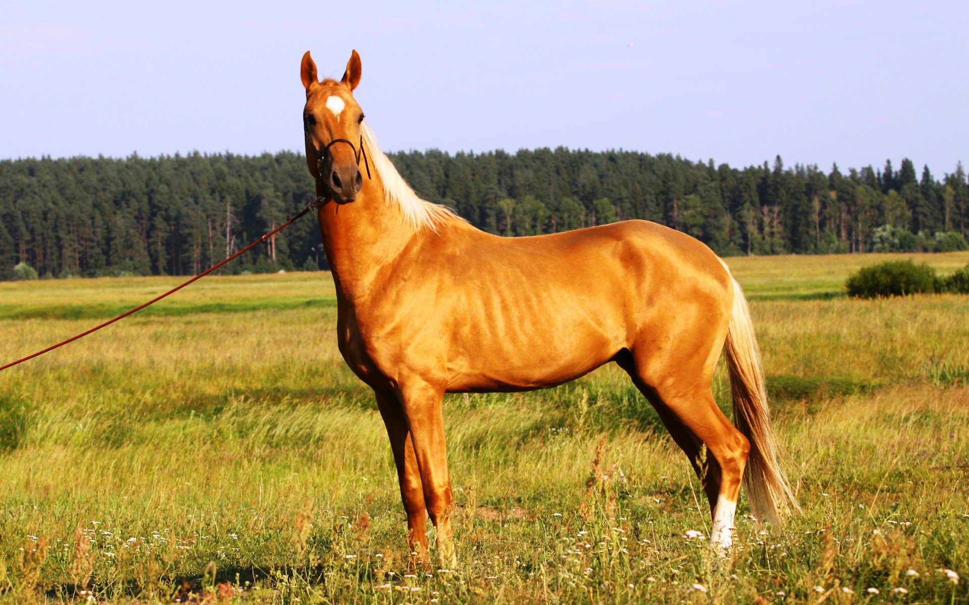 Most Beautiful Horse HD Wallpapers Pictures amp Images 1920x1200