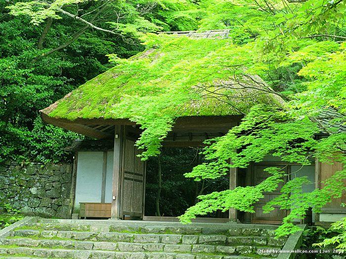 [47+] Japanese Zen Garden Wallpaper on WallpaperSafari