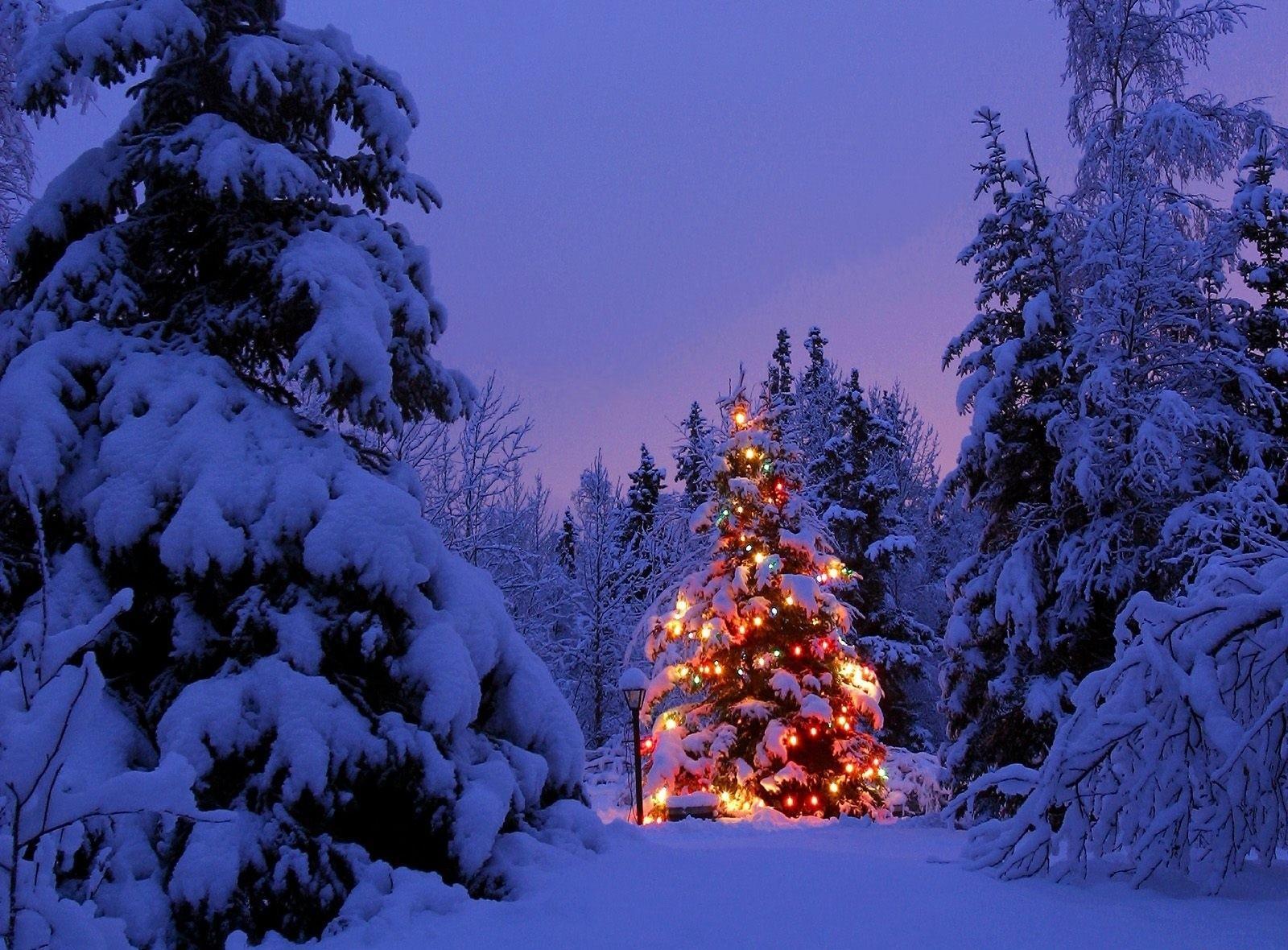 46 Lighted Christmas Tree Wallpaper On Wallpapersafari