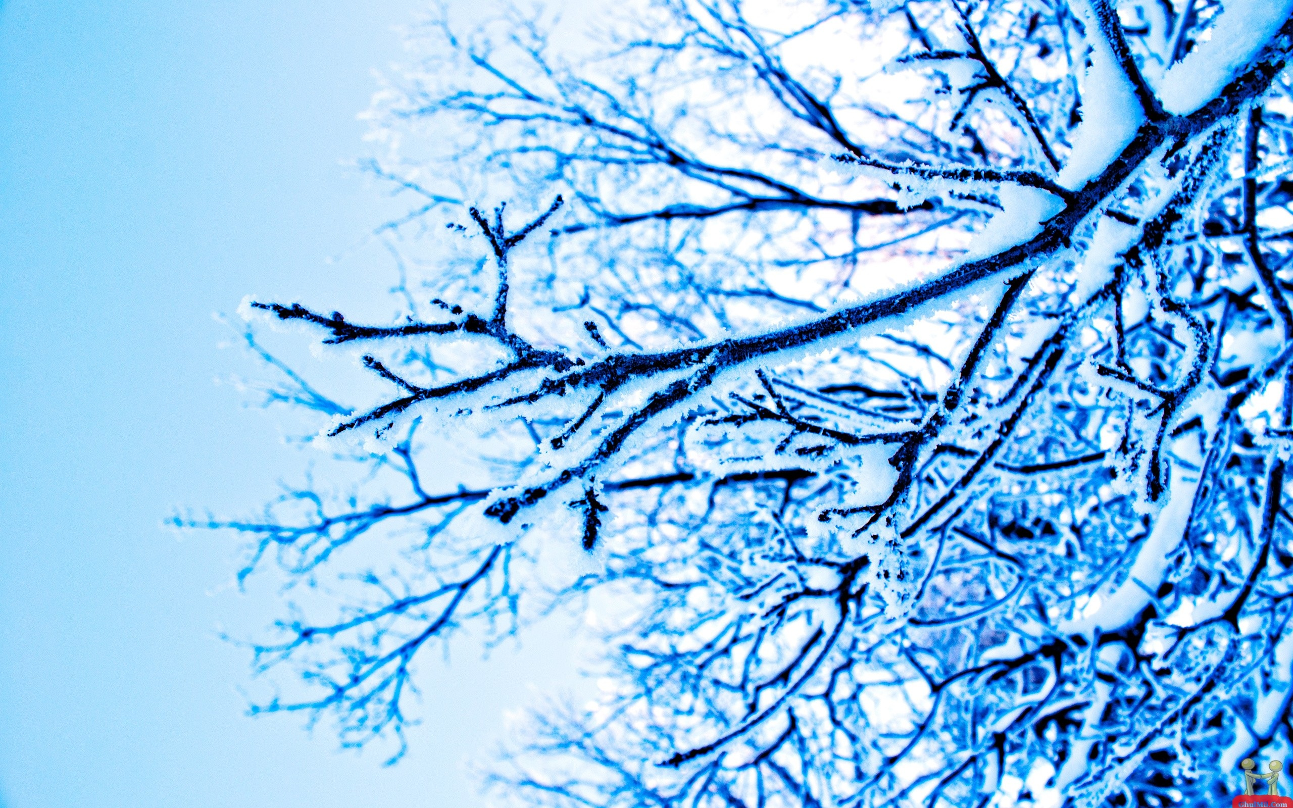 Snow Covered Trees HD Wallpaper E Entertainment 2560x1600