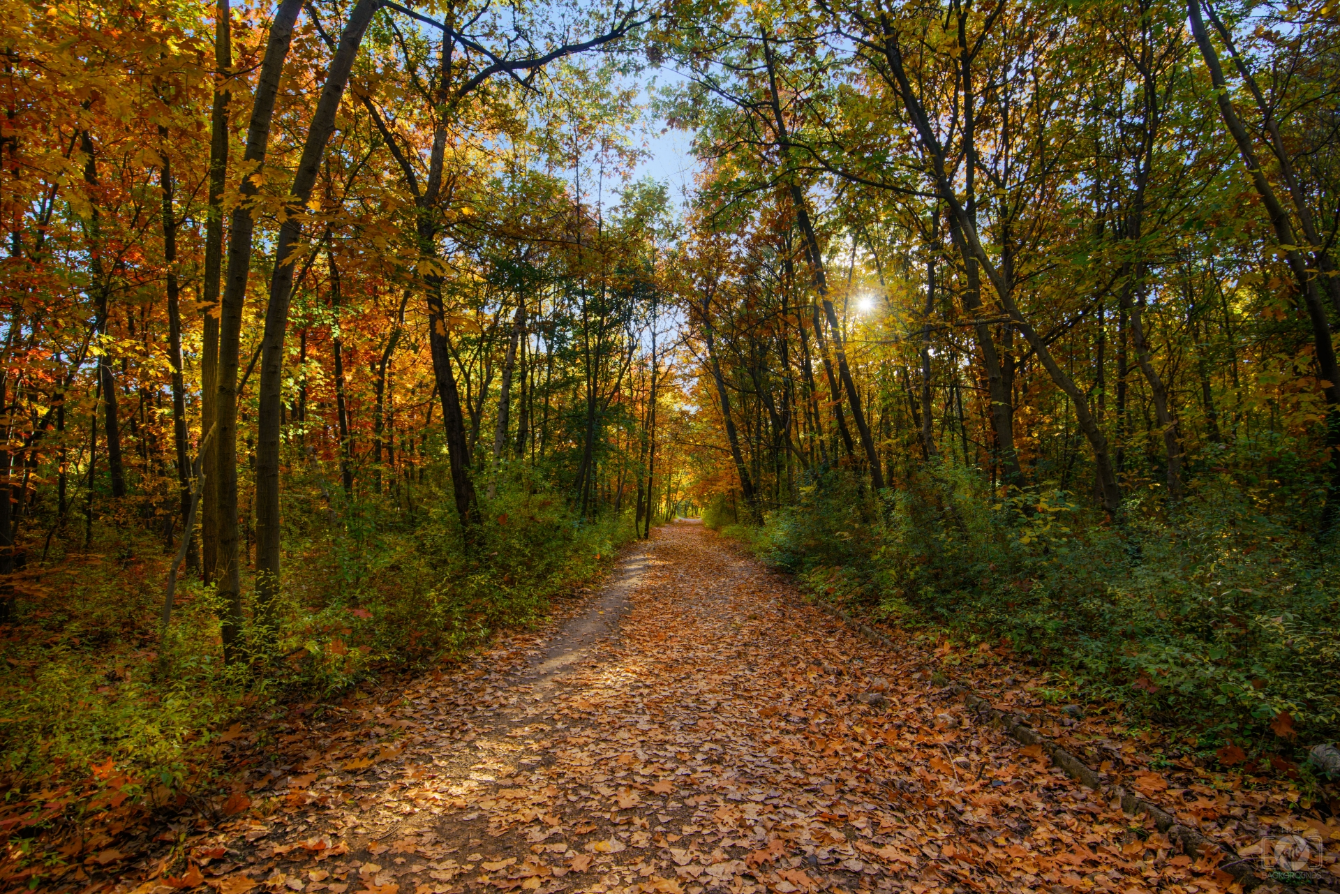 Autumn Forest Trail Background   High quality Backgrounds 1920x1281