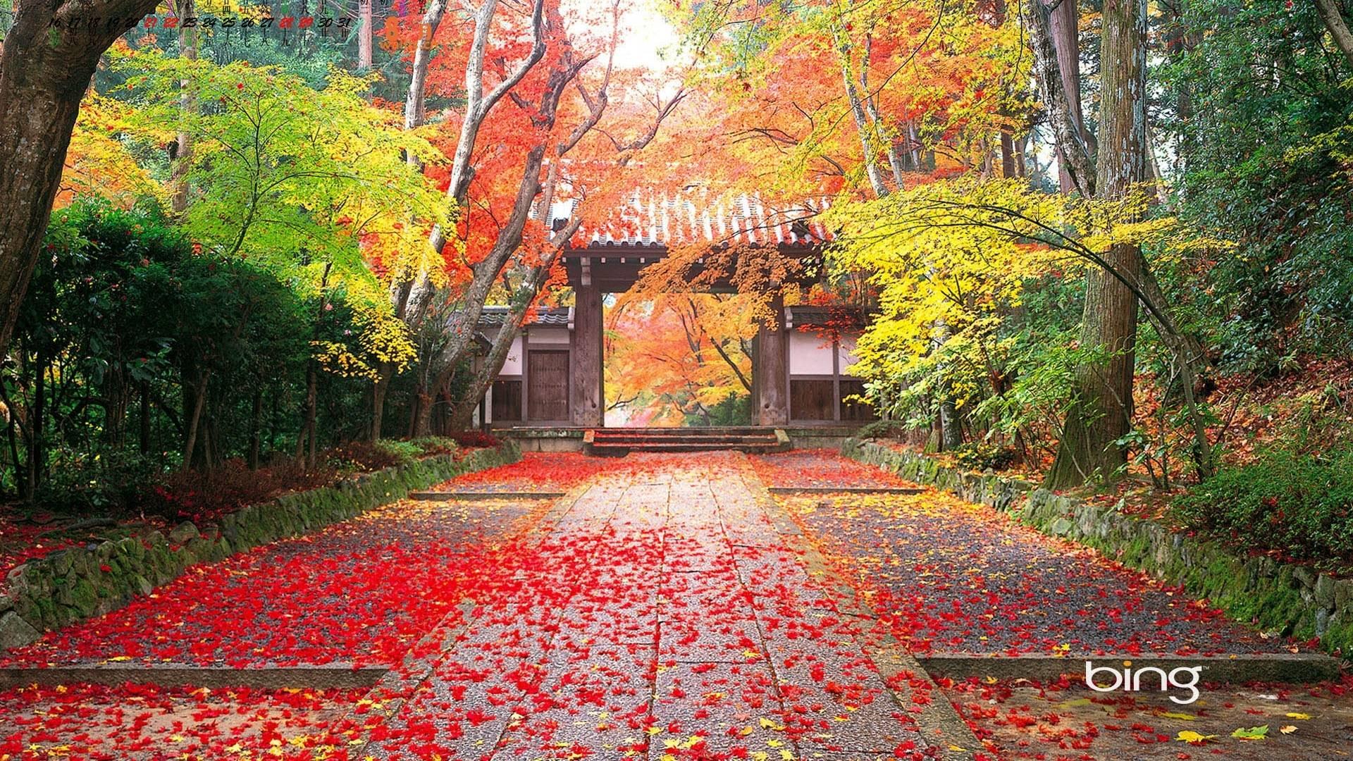 Bing Wallpapers HD 1920x1080