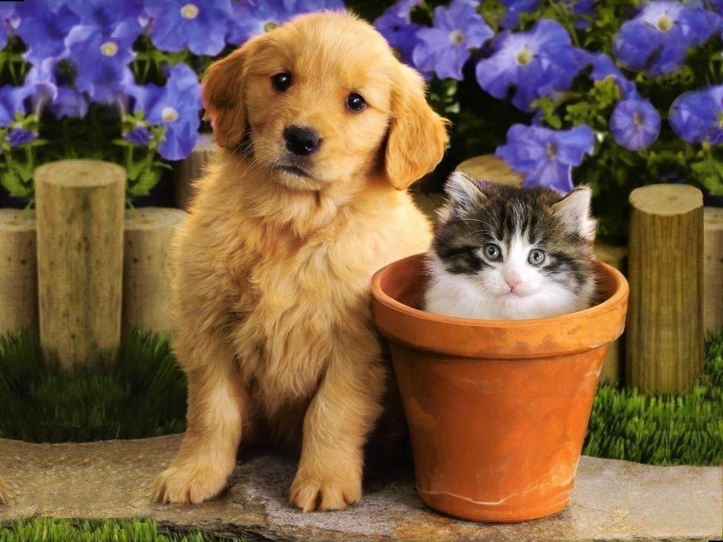 Kittens Puppies   Teddybear64 Wallpaper 16751401 1024x768