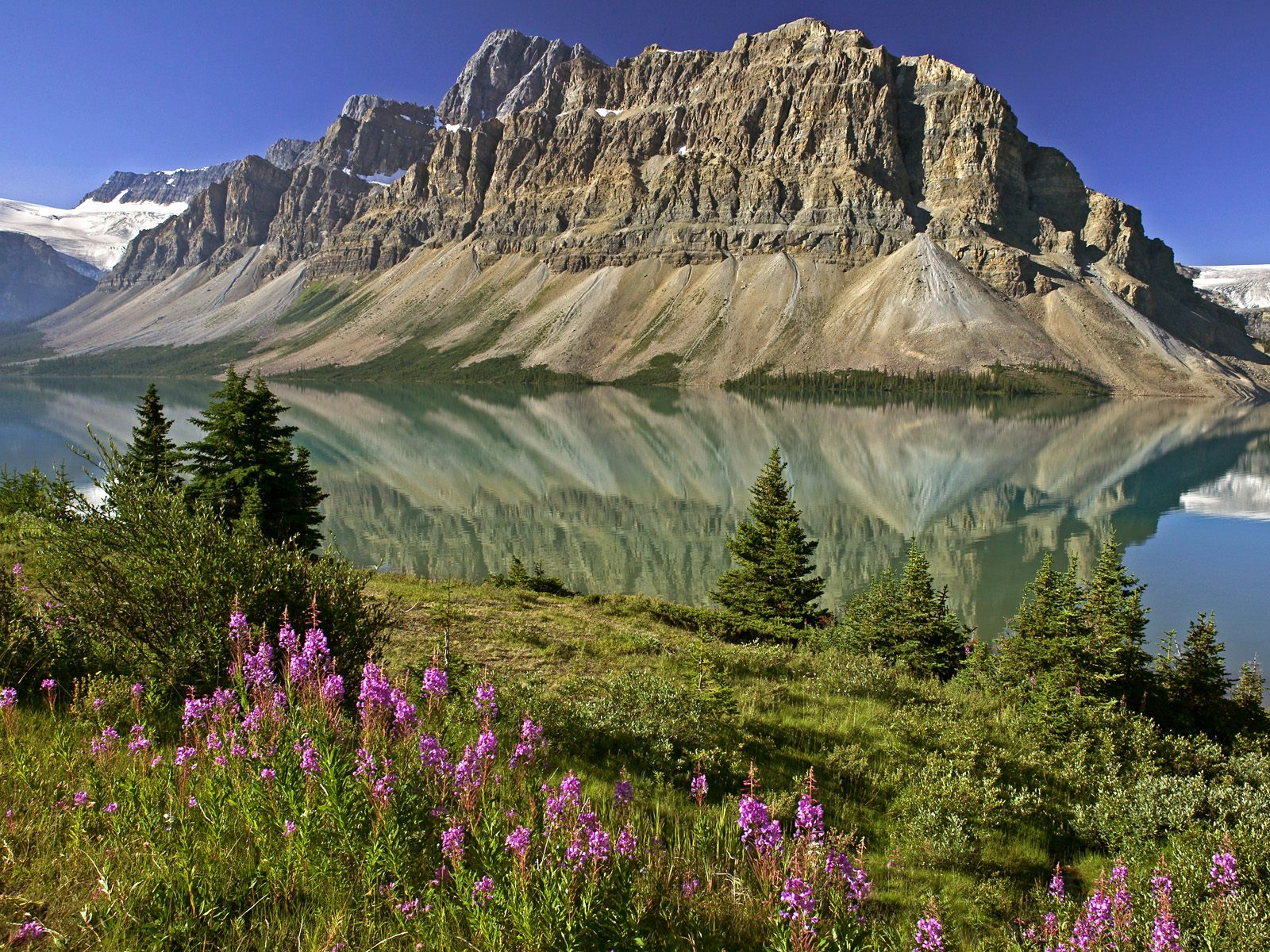 Bow Lake and Flowers Banff National Park Alberta Canada wallpaper 1600x1200
