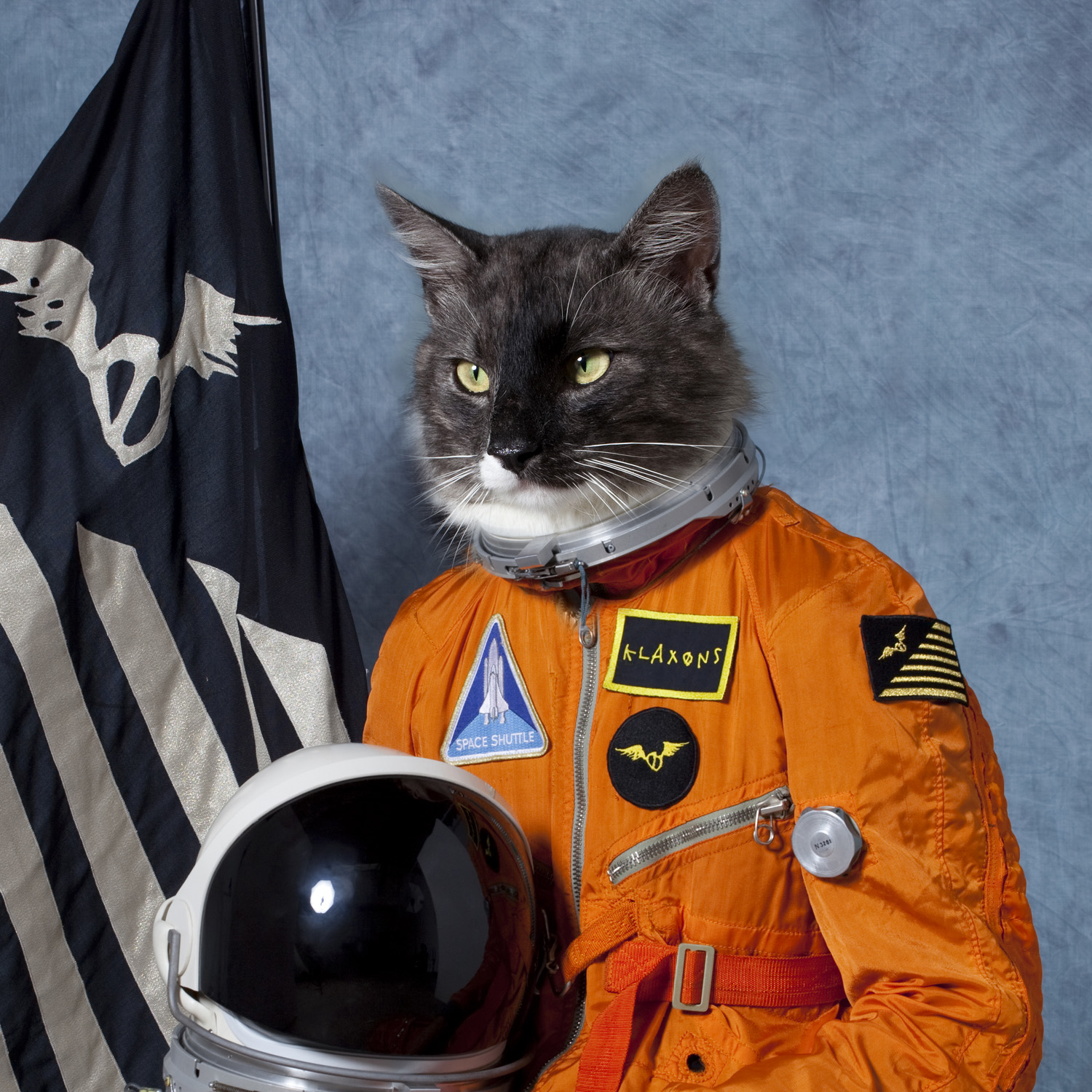 Astronaut Cat In Space Images Pictures   Becuo 1500x1500