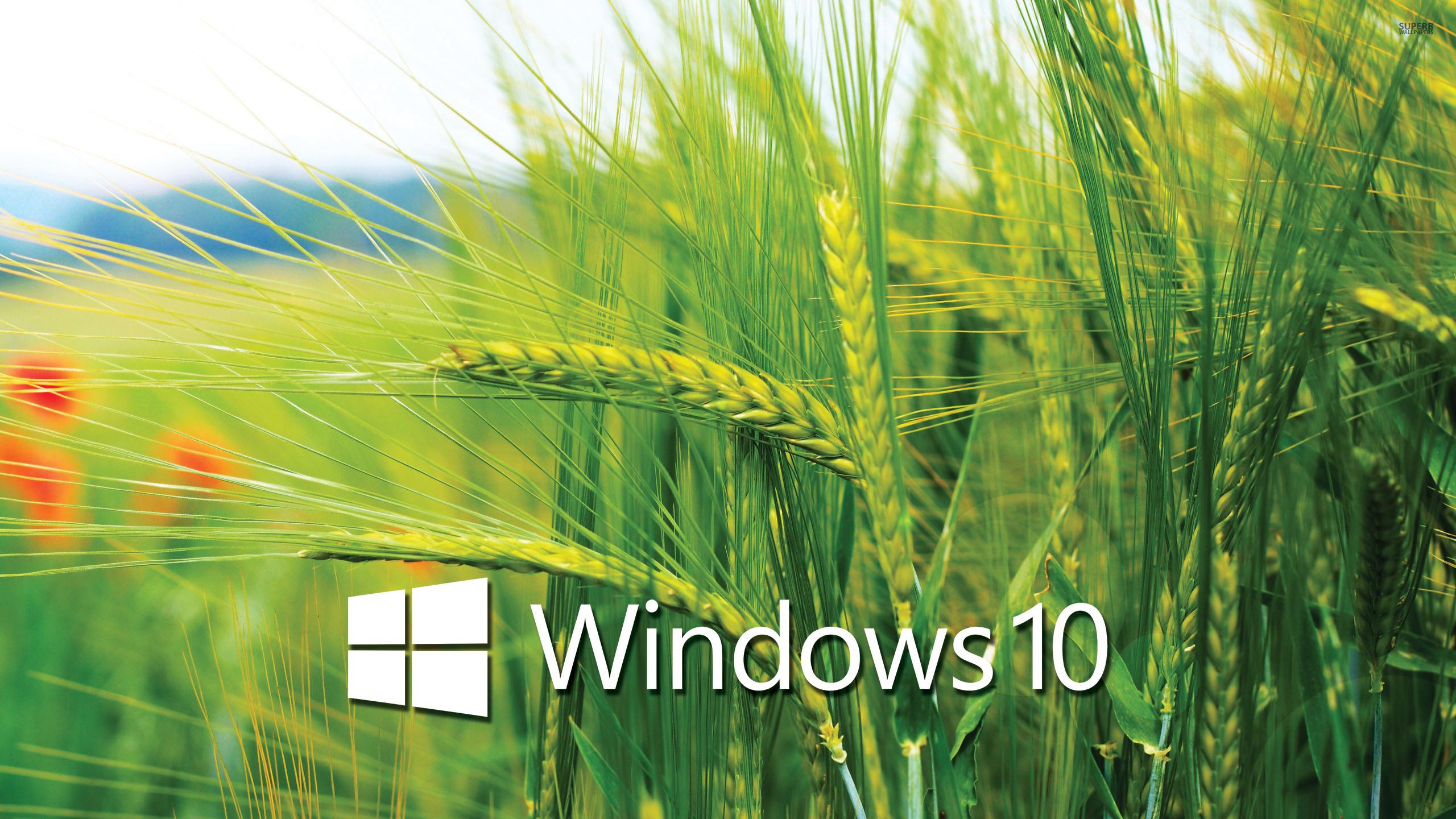 Windows 10 Wallpaper 2560x1440  WallpaperSafari