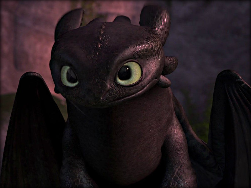 Toothless   Toothless the Dragon Wallpaper 32987035 800x600