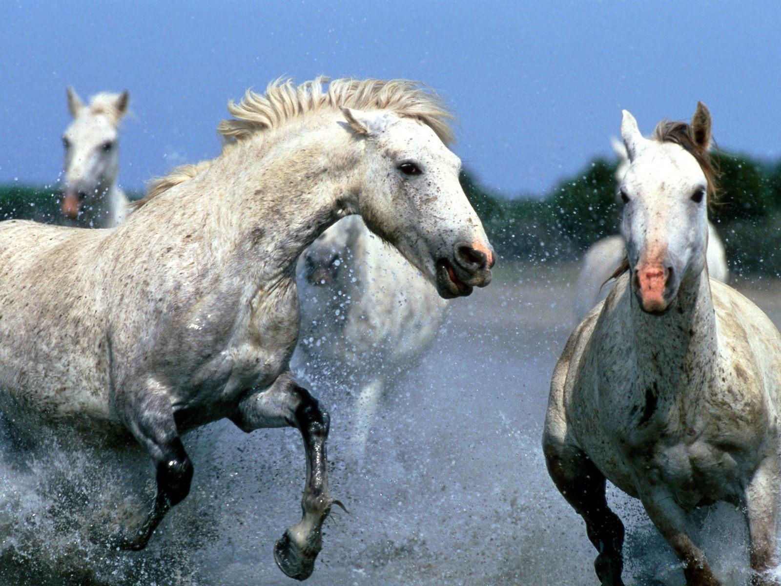 Animals Zoo Park Horses Wallpapers for Desktop 1600x1200